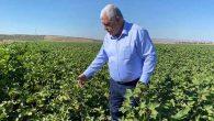 """CHP'li Vekil, """"Pamuk Mesajını"""" pamuk tarlasından verdi:"""