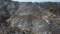 Amanoslar'da yanan 3000 hektarlık orman örtüsü yerine;