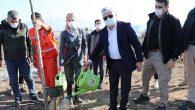 Türkiye'nin İlk Mabet Ağacı Ormanı Hatay'da