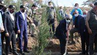 Hatay'a 4.5 Milyon Ağaç