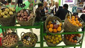 Yaş meyve sebze sektörü Moskova'ya hazırlanıyor