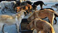 Hatay BŞB yeni hayvan barınağı yaptırıyor