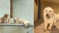 Ayhan Kit 6 Yıldır Baktığı Kayıp 2 Köpeğini Arıyor