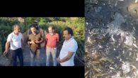 Asi'de toplu balık ölümleri