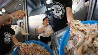 Jumbo Karidesler Balıkçının Yüzünü Güldürüyor