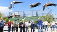 163 yırtıcı kuş, artık özgür…